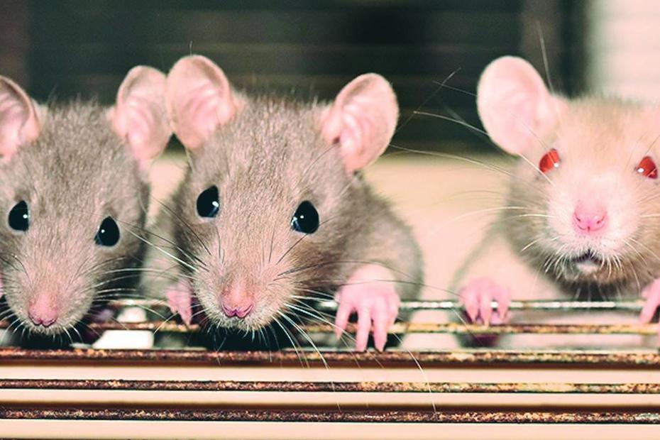 China proíbe uso de animais na indústria cosmética